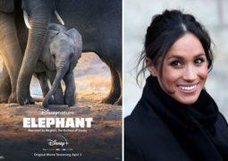 روایت مگان مارکل از زندگی فیلها در مستند «فیلها»