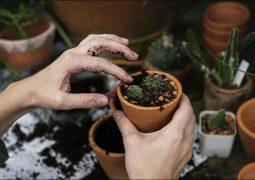 «رویش» توانمندیهای بخش باغبانی را بررسی میکند